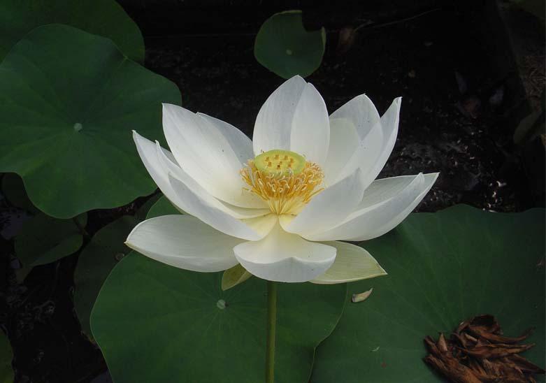 hindu singles in bloomer Related items preceded by: noticioso y lucero de la habana succeeded by: 7 días del diario de la marina en el exilio.